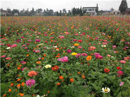野花组合花种